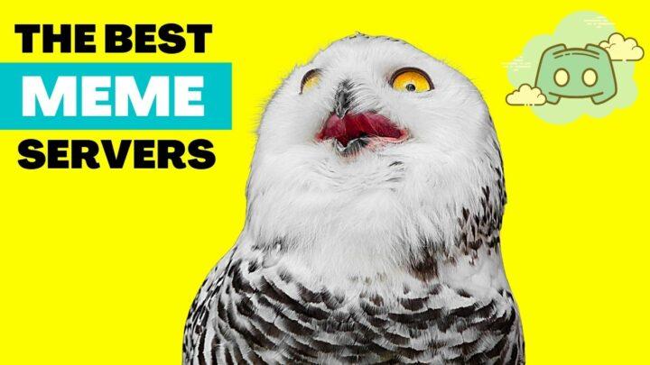 The 9 Best Discord Meme Servers — Revealed!